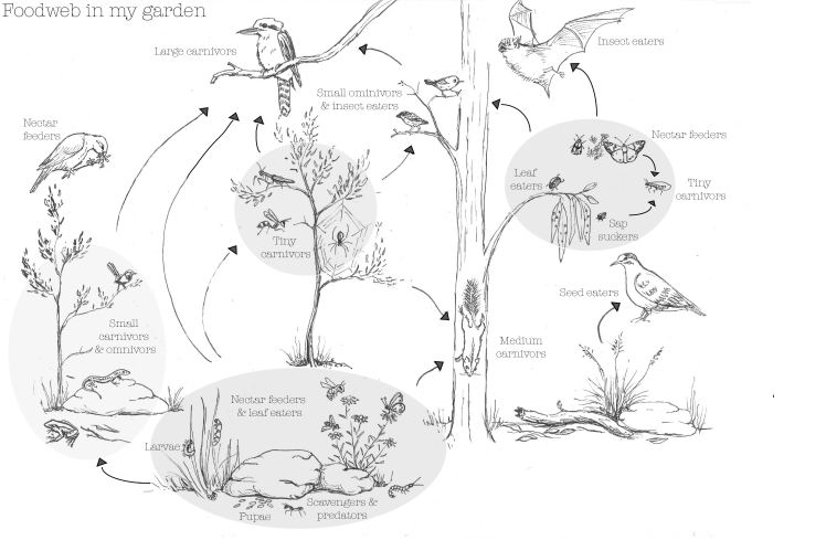 foodweb-in-my-garden-with-text